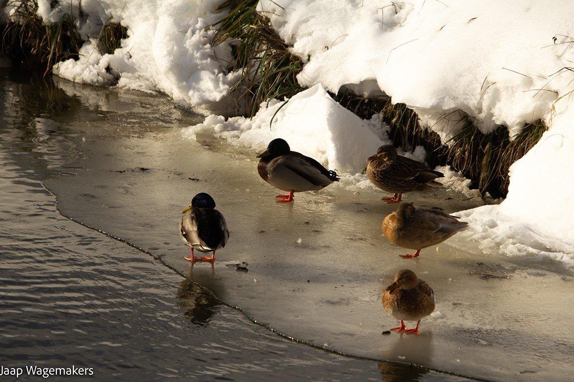winter Jaap (3)