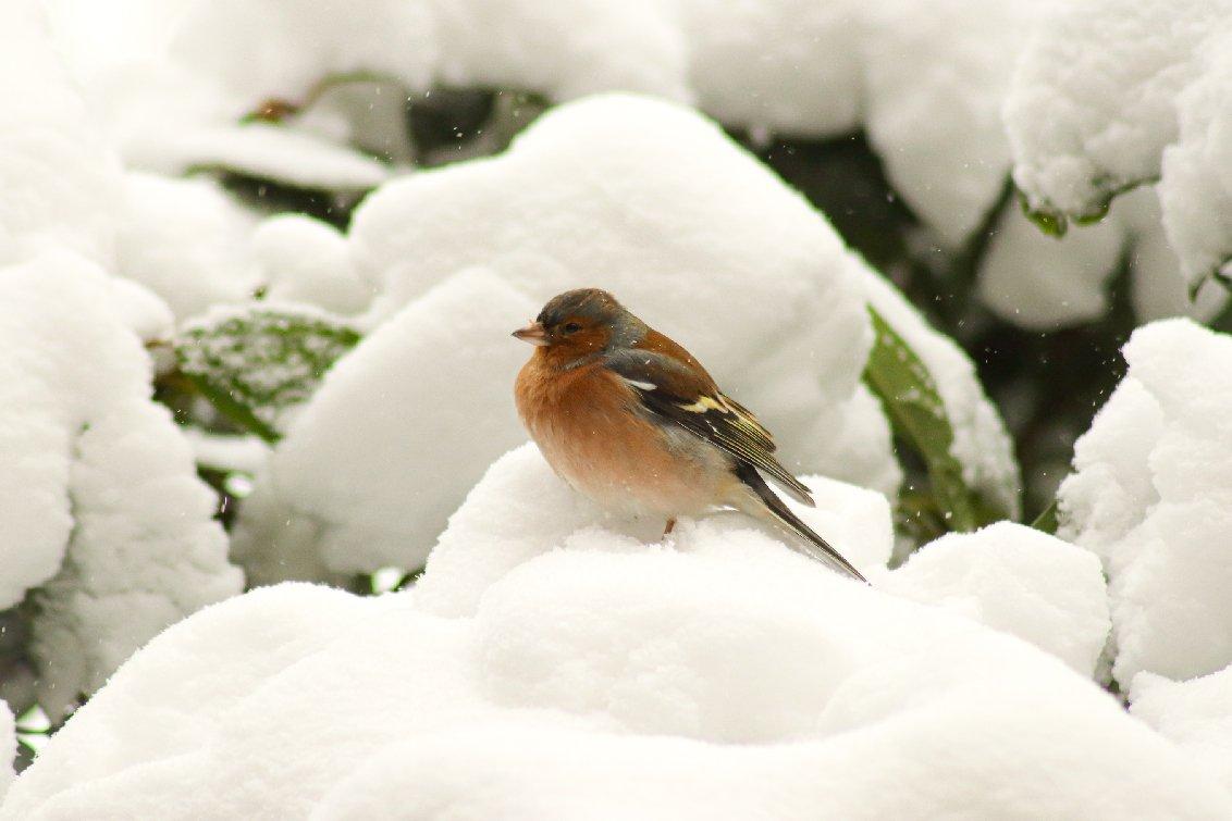 winter Jiska