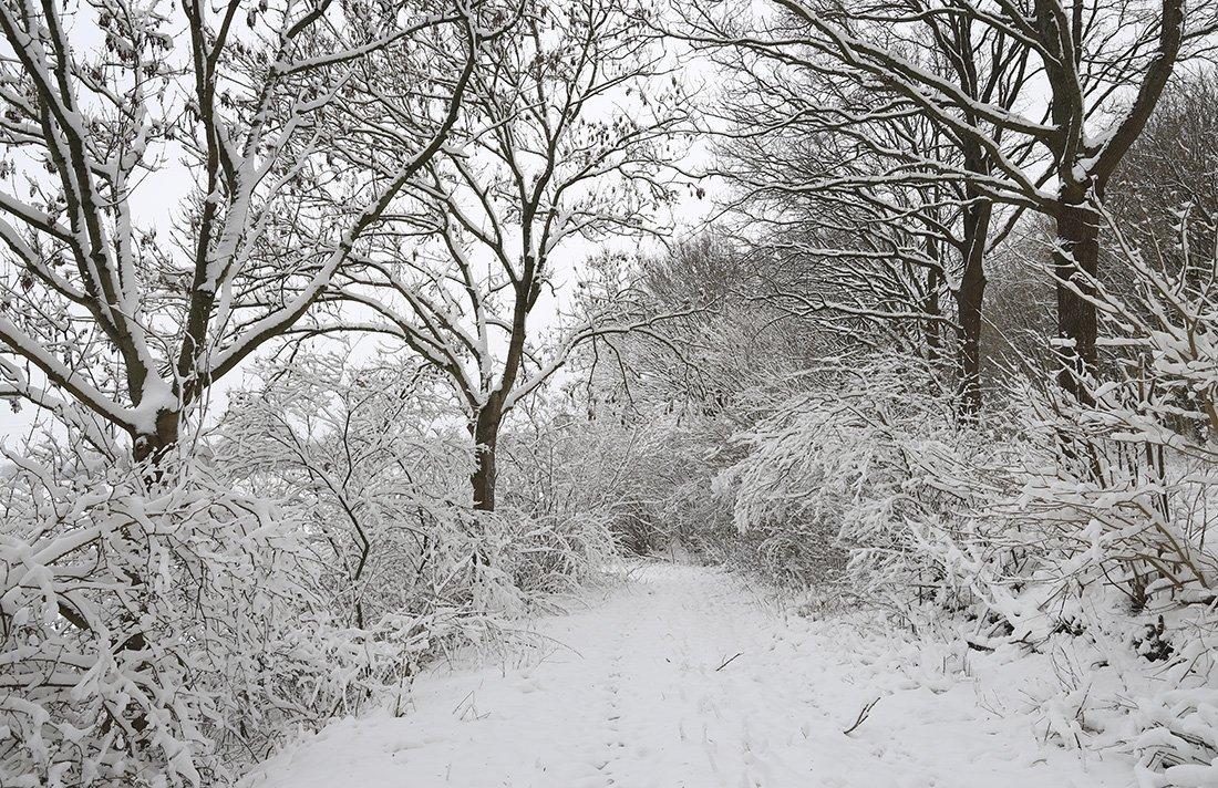 winter Joke (2)