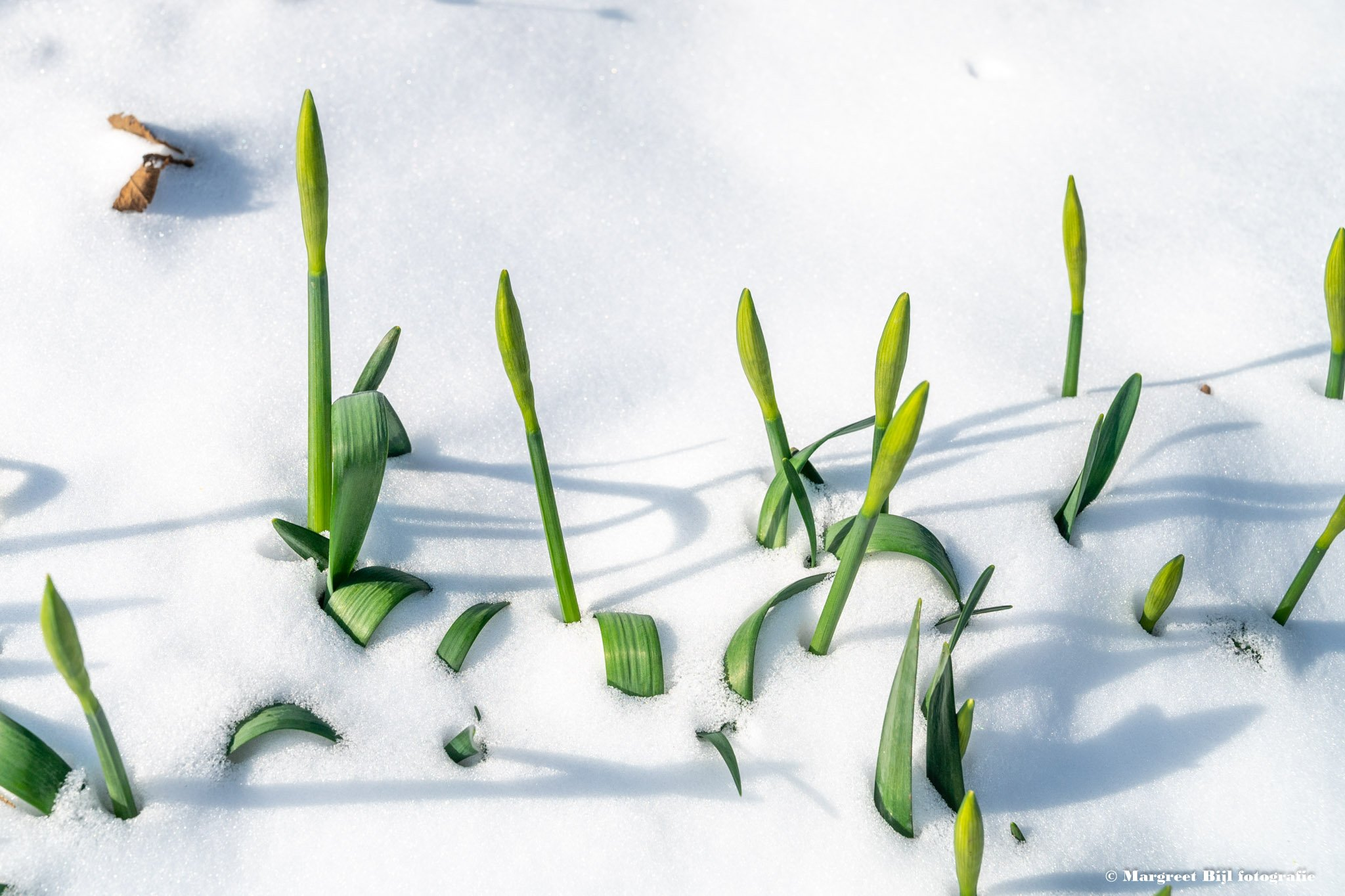 winter Margreet (2)
