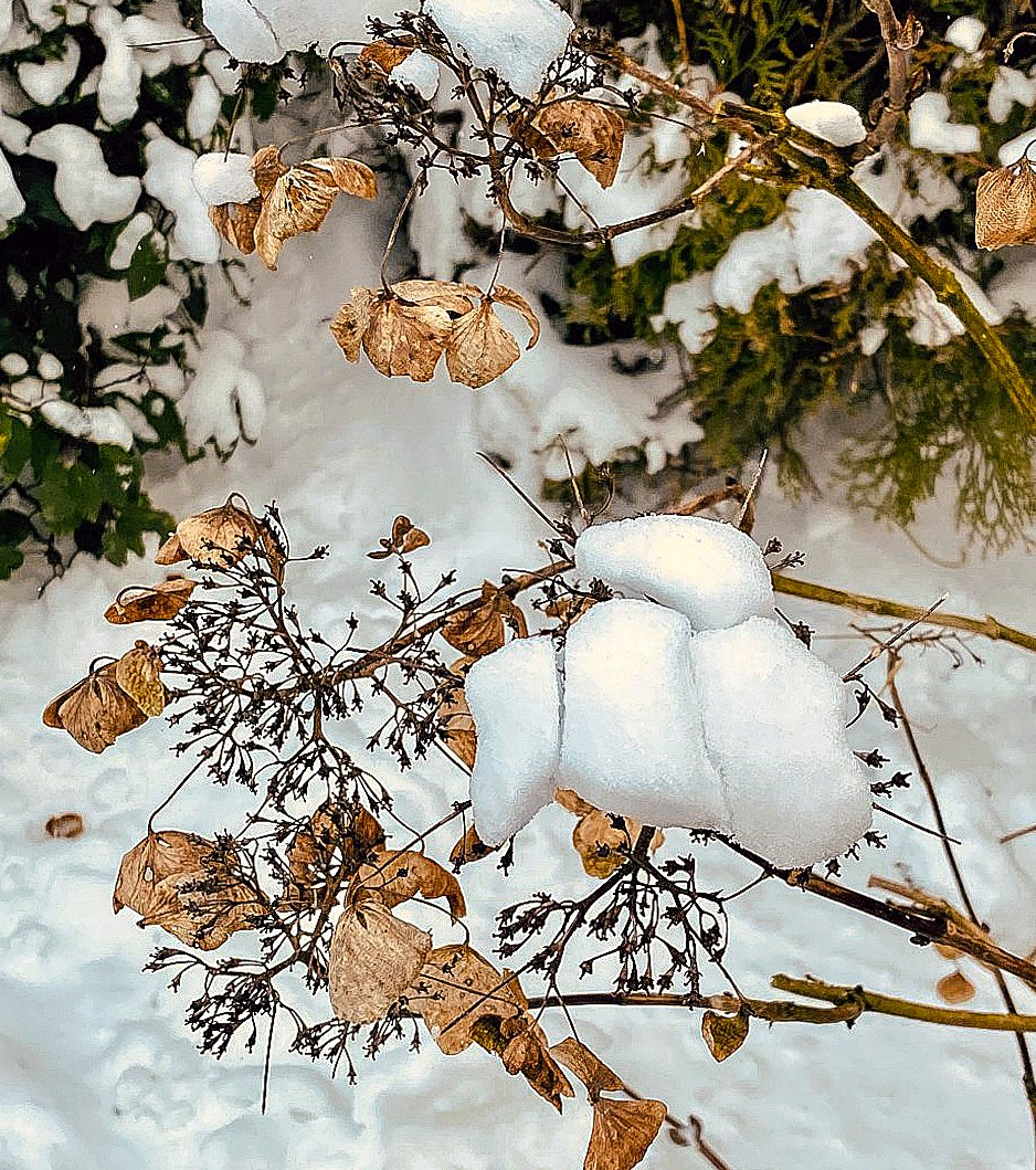 winter Marion (3)