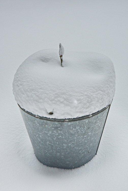winter Wim (3)