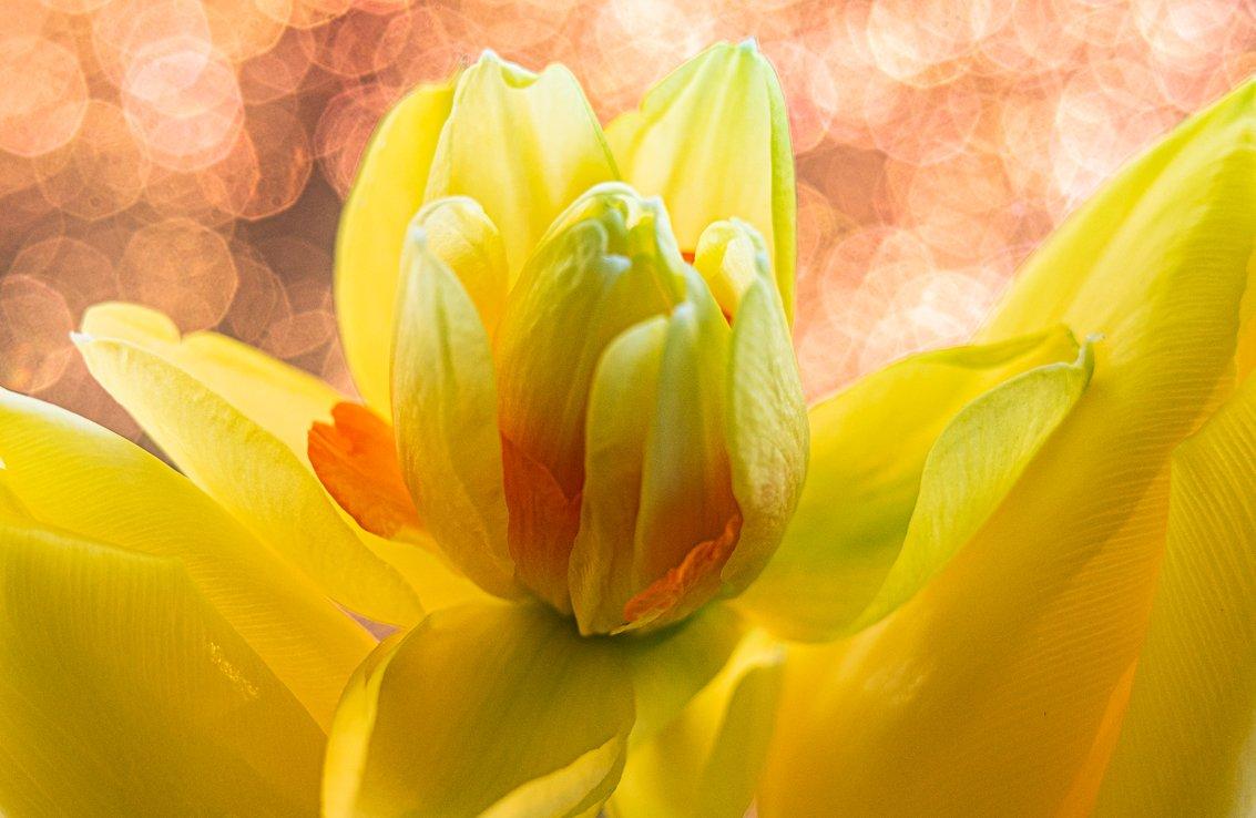 geel Helma (1)