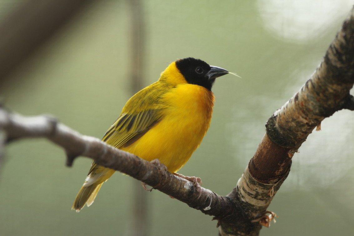 geel Nel (2)