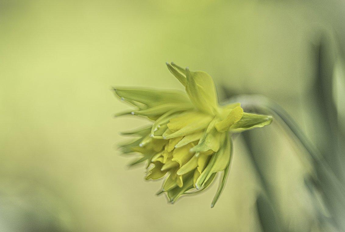 geel Tineke (2)