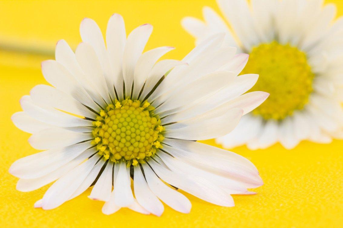 geel Wilma (1)