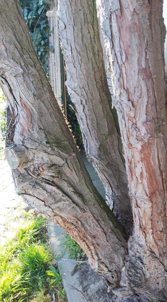 hout Ineke (2)