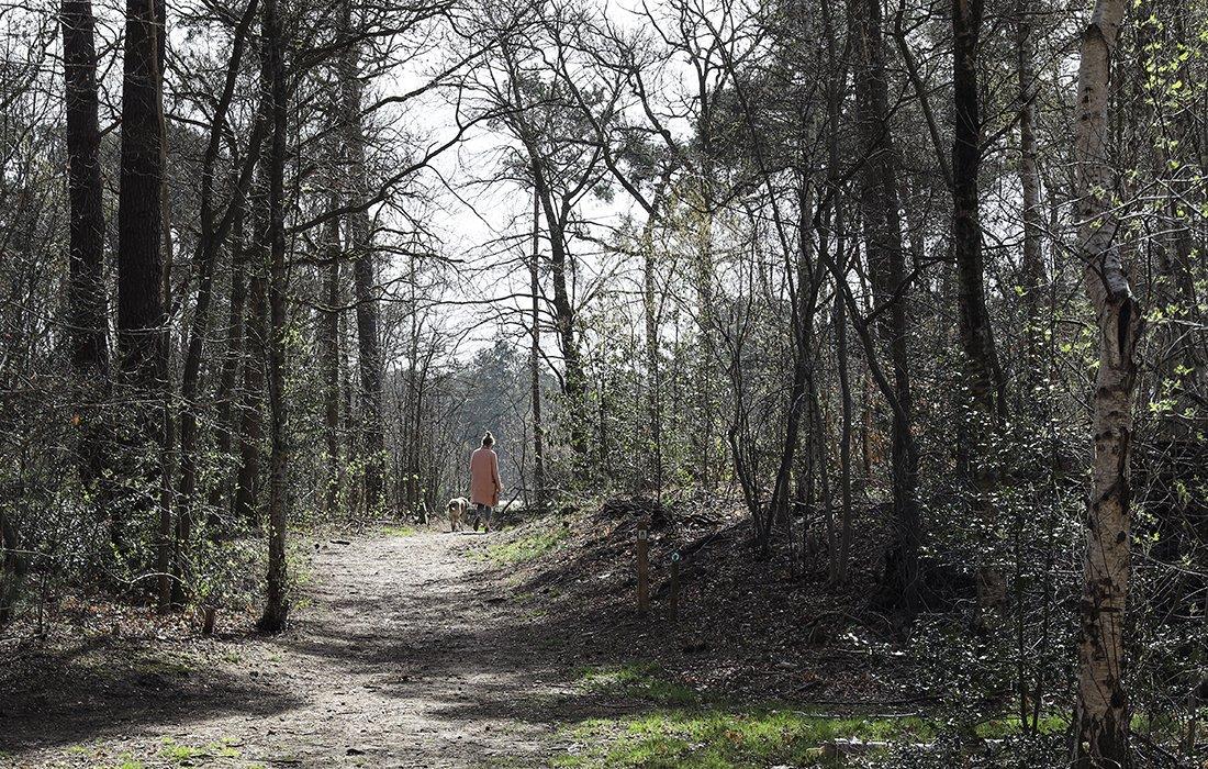Bergse heide Joke van Rooijen (9)