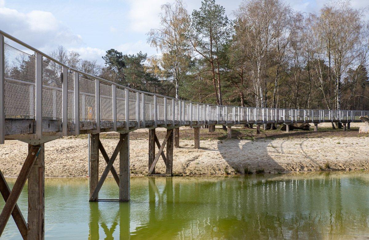 Bergse heide Mieke (2)