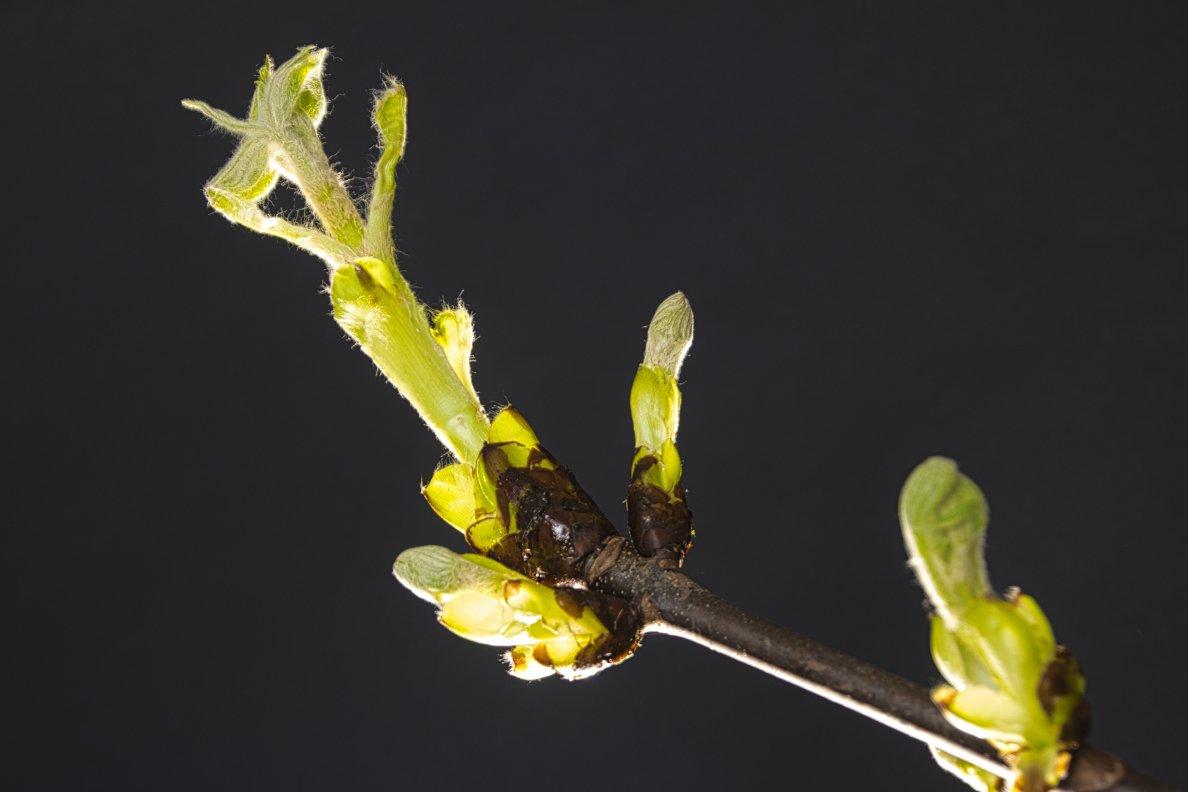 Groei en bloei Frans 1