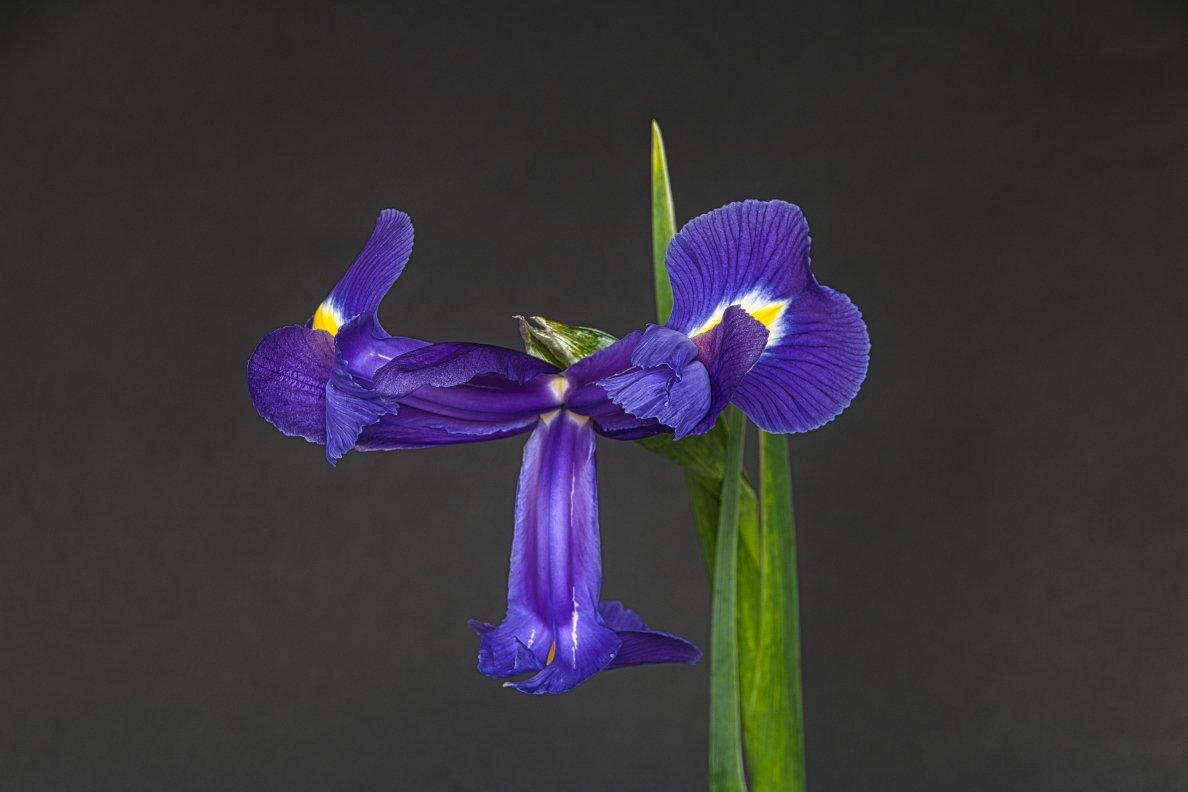 Groei en bloei Frans 3