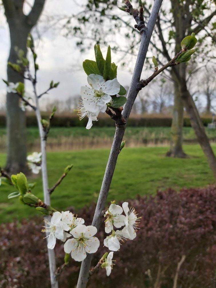 april Ineke (2)
