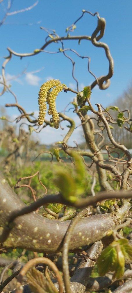 groei en bloei Ineke (2)