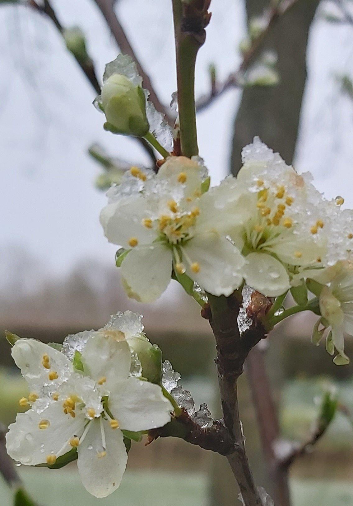 groei en bloei Ineke (1)