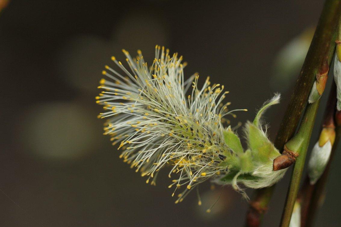 groei en bloei Nel (2)
