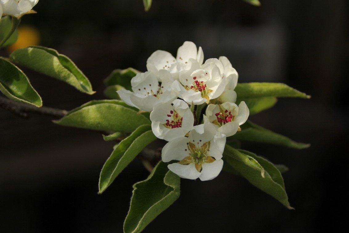 groei en bloei Nel (3)