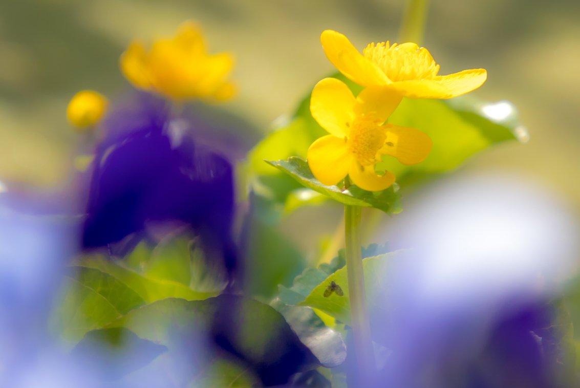 groei en bloei Willem (2)