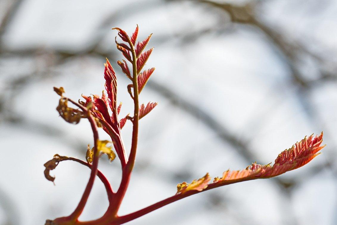 groei en bloei Wim (2)