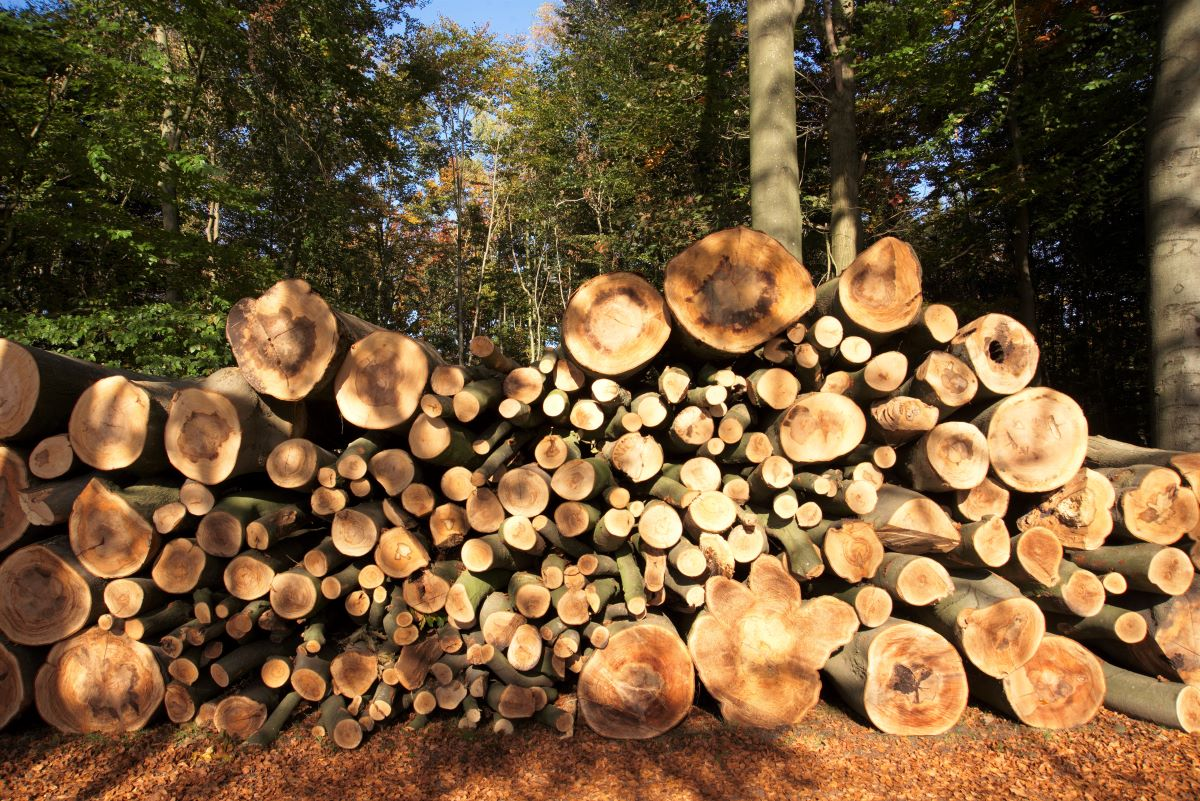 hout Fred (2)