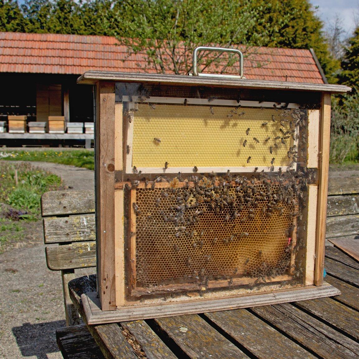 alg 2 Bijenboerderij Jeanne (5)