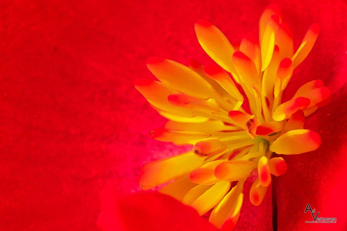 geel-rood Ad (2)