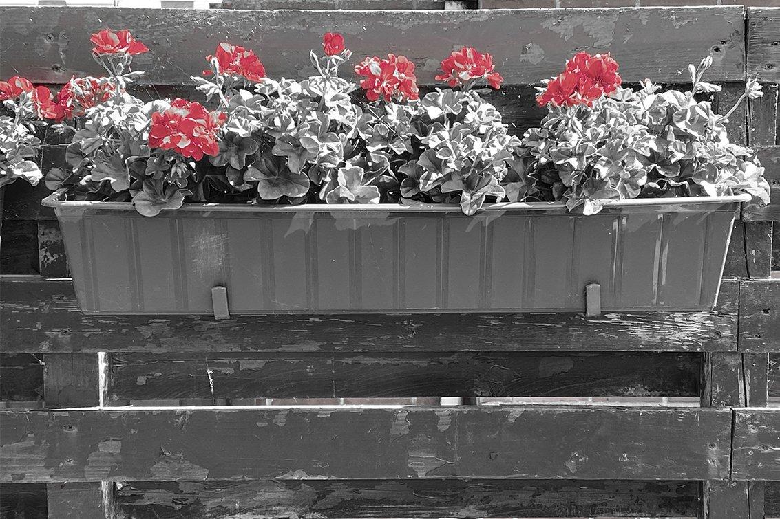 geel-rood Ruud (2)