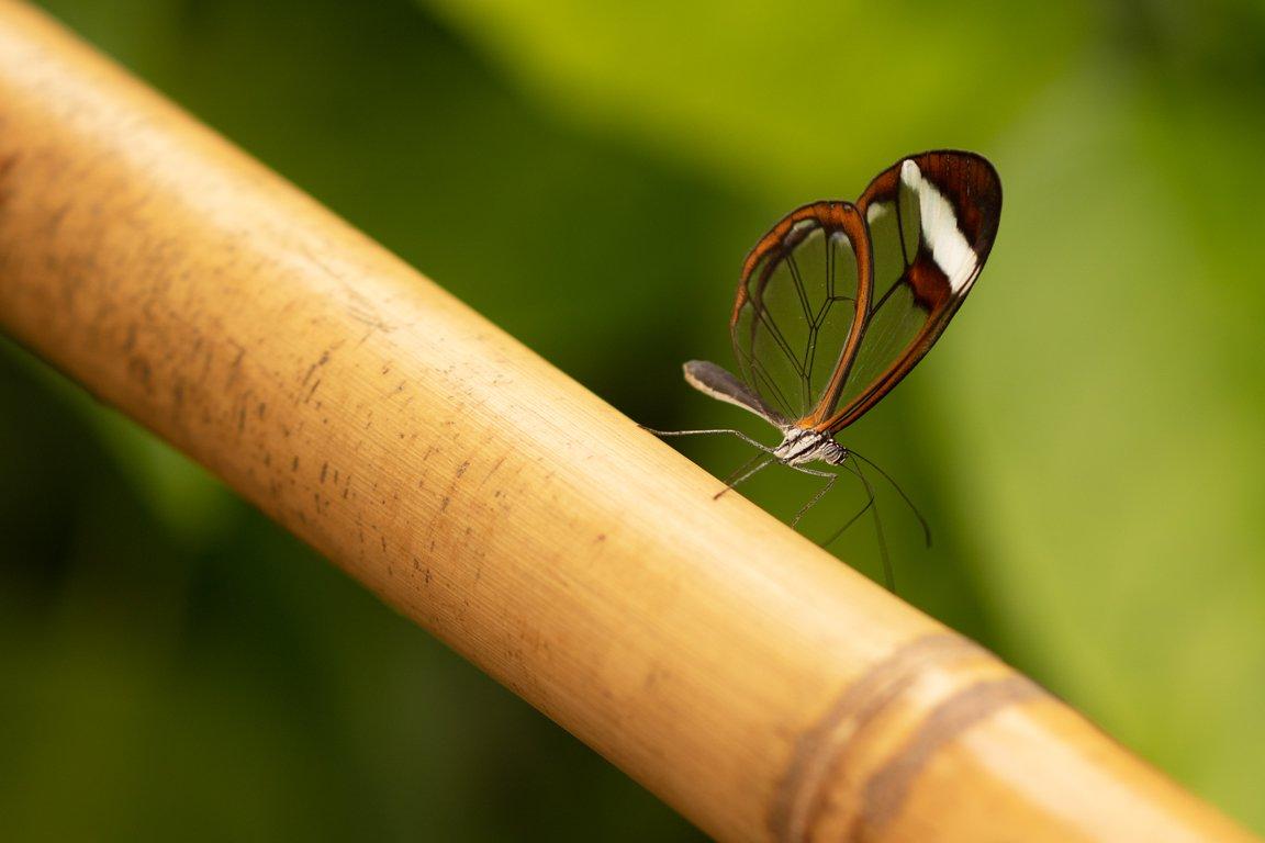 Alg2-Vlindertuin Jeanne (1)