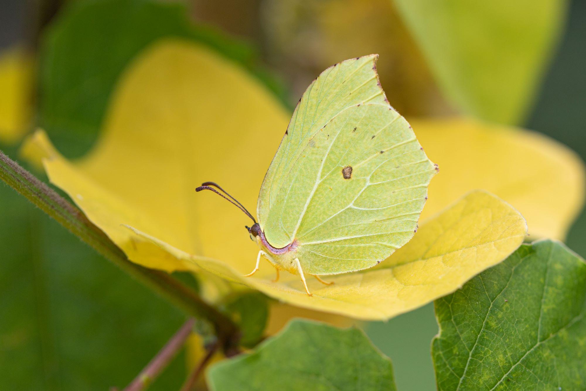 Alg2-Vlindertuin Mieke