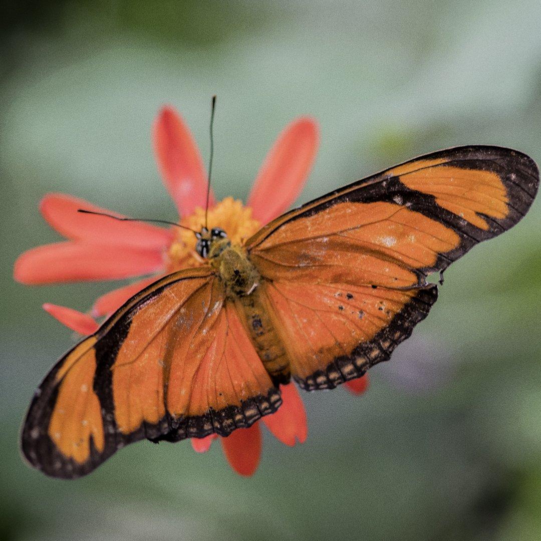 Alg2-Vlindertuin Ruud (2)