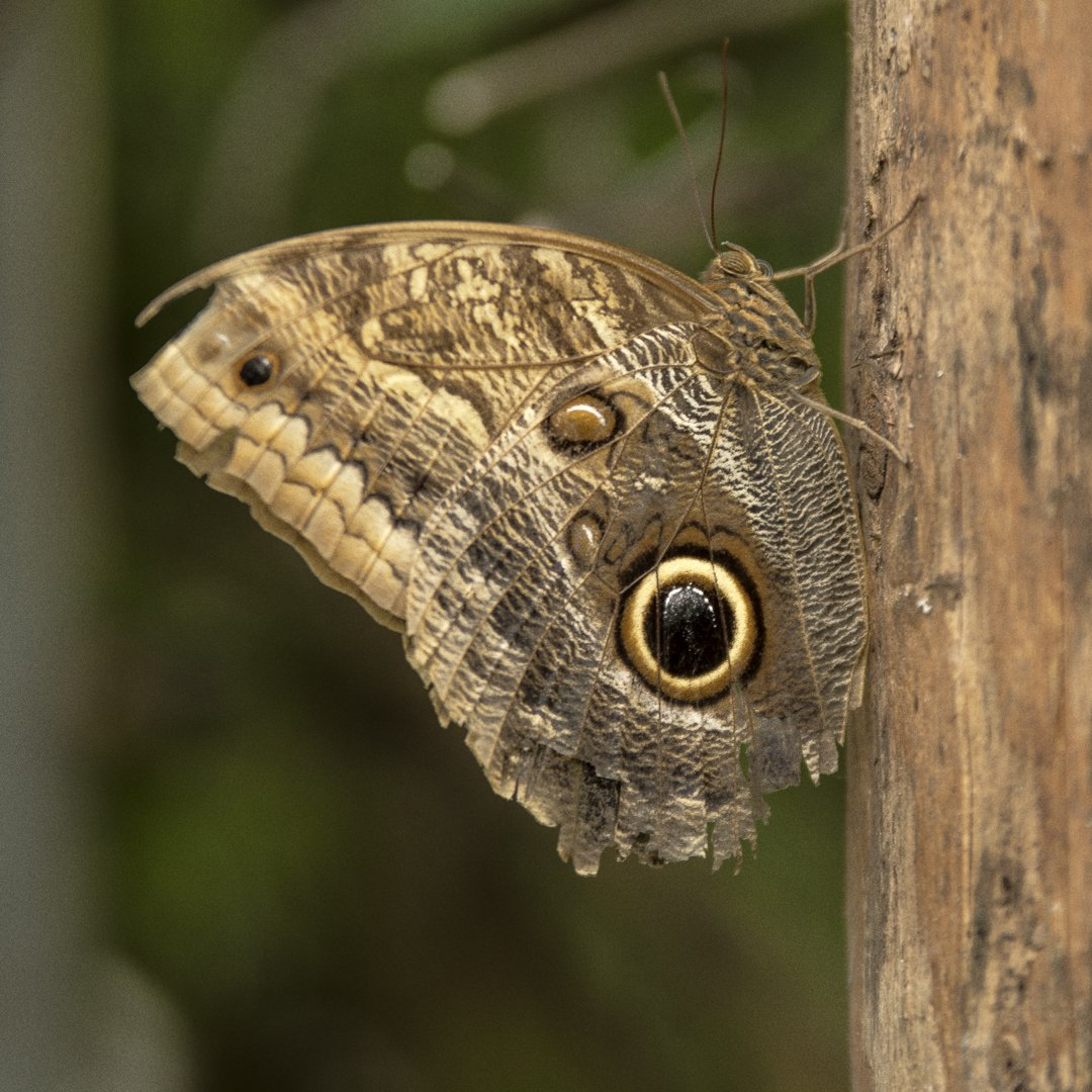 Alg2-Vlindertuin Ruud (3)