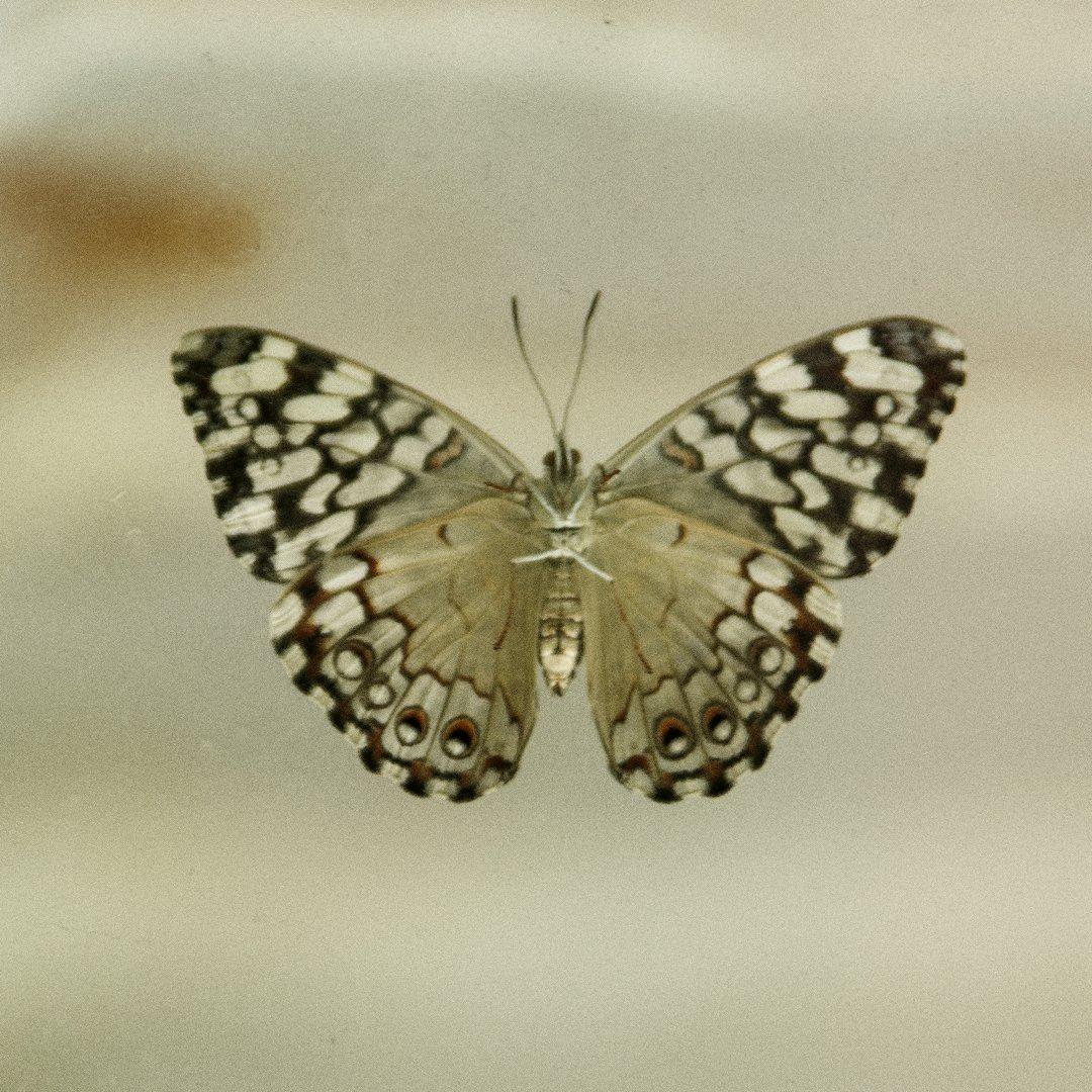 Alg2-Vlindertuin Ruud (4)