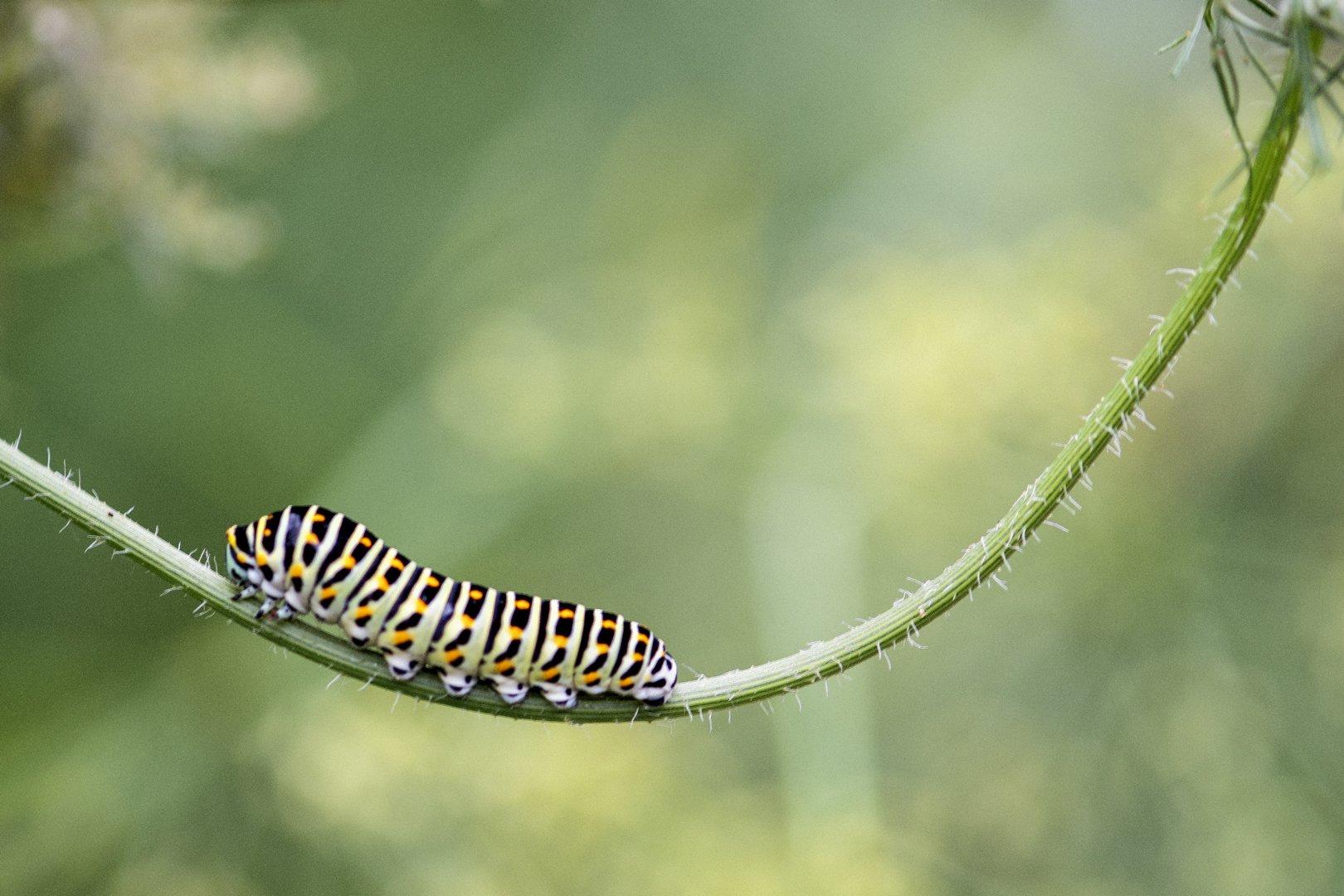 Alg2-Vlindertuin Ruud (6)