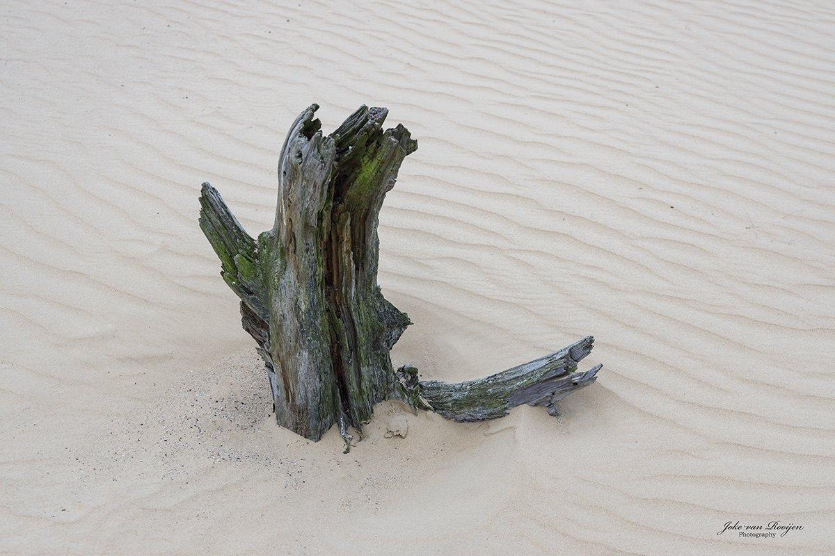 nat3 Drunense duinen Joke (2)