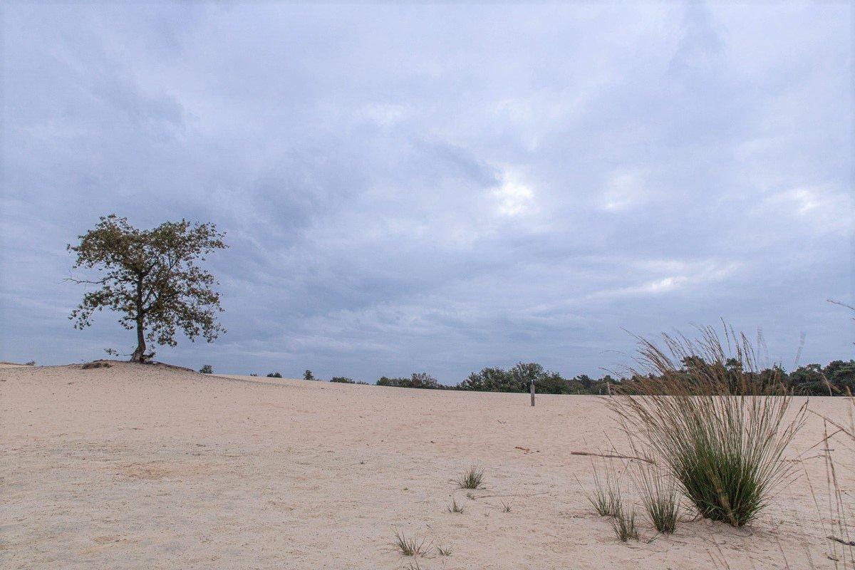 nat3 Drunense duinen Mieke (1)