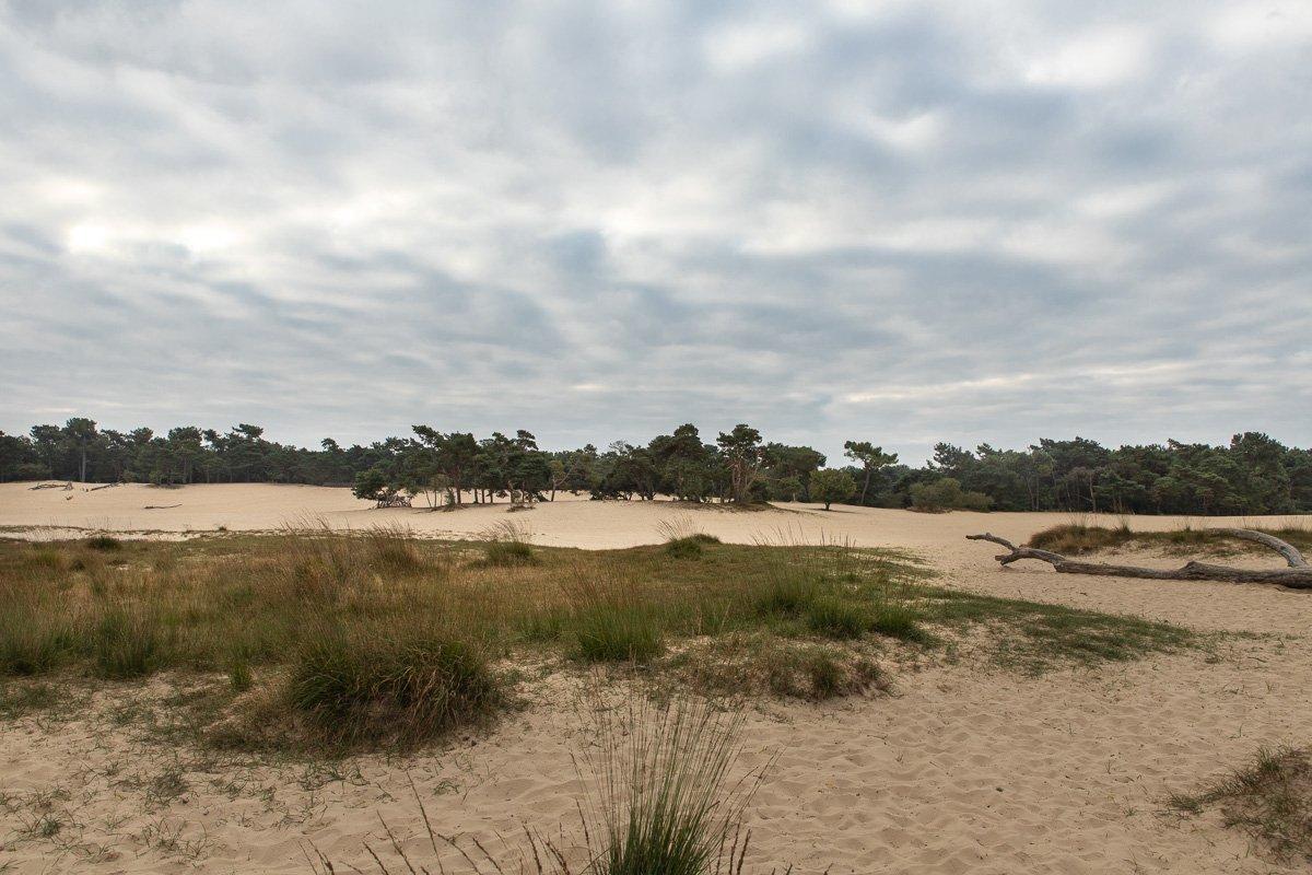 nat3 Drunense duinen Mieke (2)