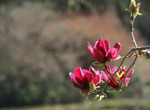 Algemeen 1 Kalmthout Arboretum (14)