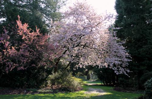 Algemeen 1 Kalmthout Arboretum (15)
