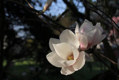 Algemeen 1 Kalmthout Arboretum (19)