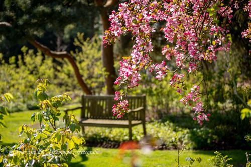 Algemeen 1 Kalmthout Arboretum (4)