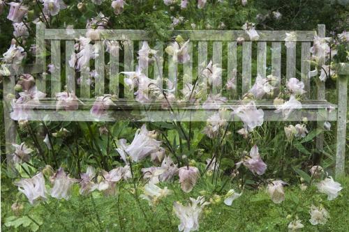 natuur 3 Arboretum Kalmthout  (4)