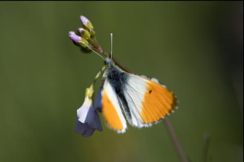 natuur 3 Breda macro (2)