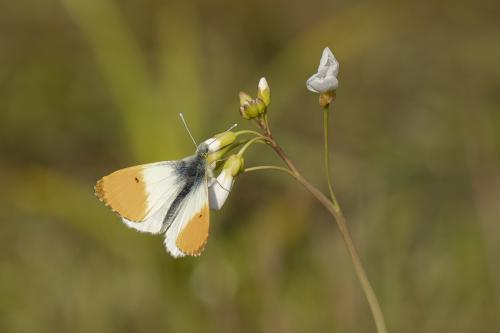 natuur 3 Breda macro (5)