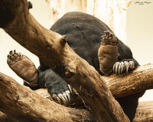 natuur 3 Burgers Zoo (30)