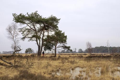 natuur 3 Kalmthout (3)