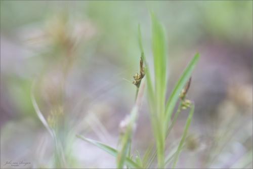 natuur 3 heemtuin Rucphen (10)