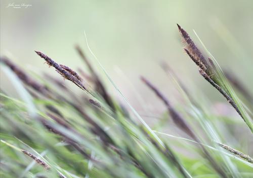 natuur 3 heemtuin Rucphen (8)